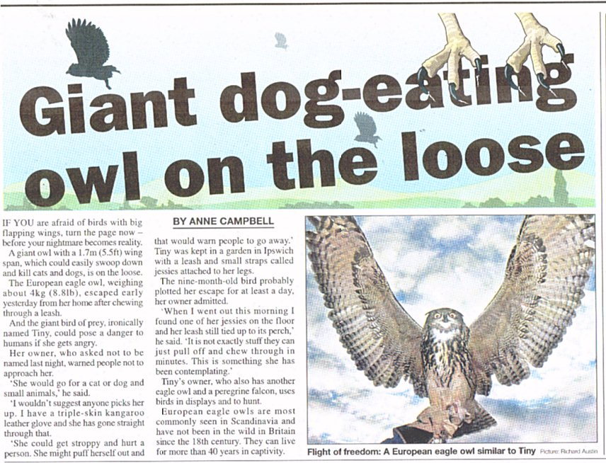 Is this what people have really seen? Tiny the Eagle Owl [Metro Jan31,2006]
